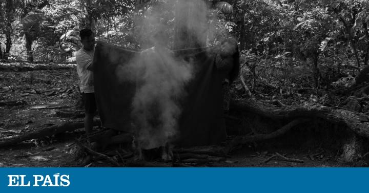 Los indígenas recurren a la medicina del bosque