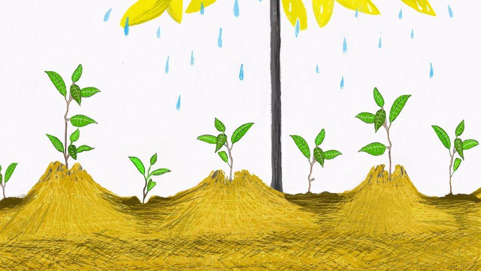 Y juntos plantamos un montón de semillas junto al árbol.