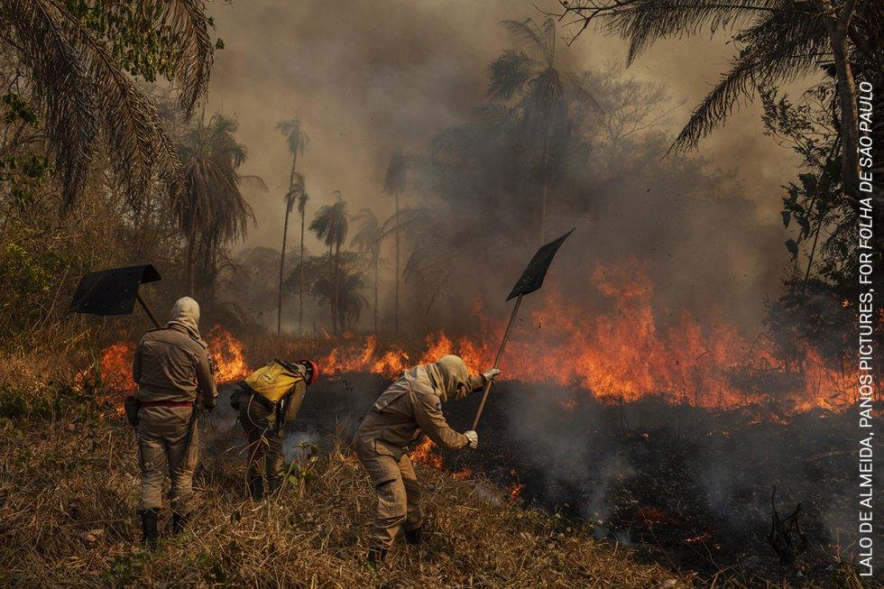Los bomberos combaten un incendio en la granja de São Francisco de Perigara, en Brasil, que alberga una de las mayores poblaciones de guacamayos jacinto. Cerca del 92% de la superficie de la granja, dedicada en su mayor parte a la conservación, quedó destruida por el fuego. Casi un tercio de la región brasileña del Pantanal -el mayor humedal tropical del mundo y las praderas inundadas, que se extienden por unos 140.000 a 160.000 kilómetros cuadrados- fue consumida por los incendios en el transcurso de 2020.