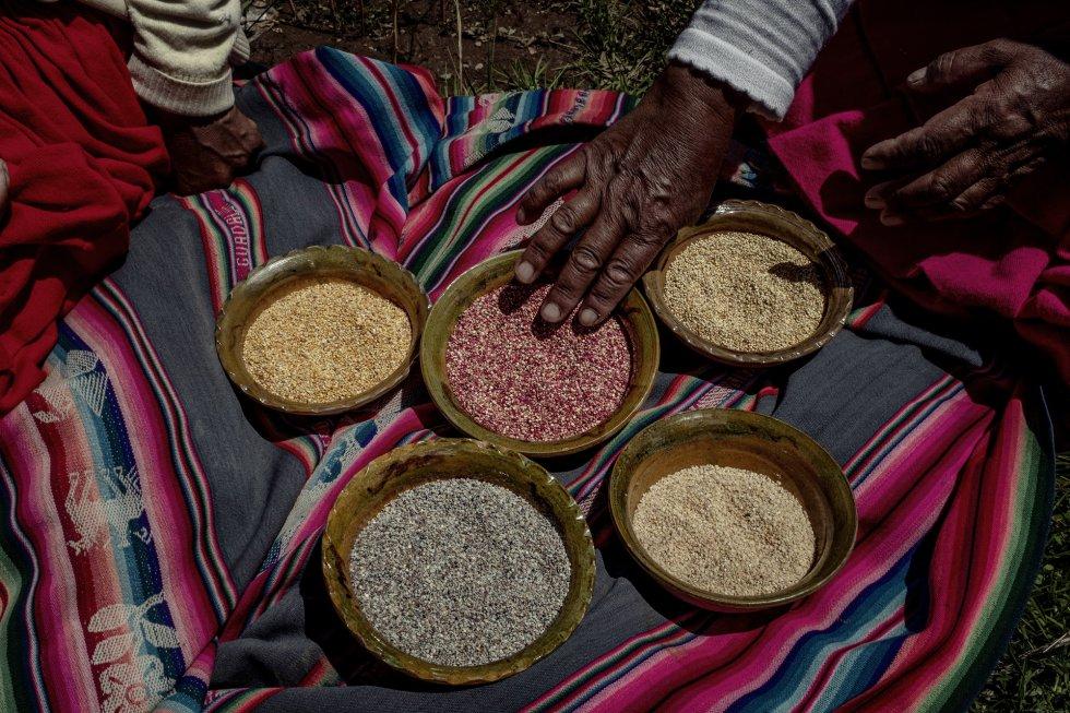 """""""Cuando éramos niños, la quinoa de colores era común: la producíamos para comerla. Luego, poco a poco, desapareció, desplazada por la blanca"""", explica Eulalia Silva. Ella es campesina y pertenece a una de la más de 3.300 familias que son parte de ReSCA. En la imagen, enseña los frutos de su cosecha: quinua 'huaripunchu', 'misa' y 'chulpi' que ahora ha vuelto a cultivar para su propio consumo."""
