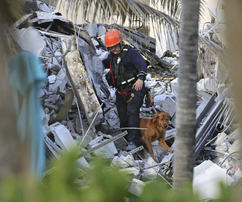 Un bombero realiza tareas de búsqueda y rescate con la ayuda de un perro, entre los escombros del condominio Champlain Towers South.