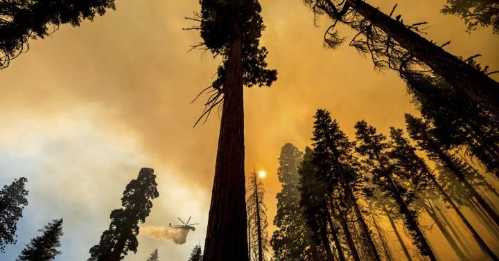 El fuego que abrasa las milenarias secuoyas de California, en imágenes