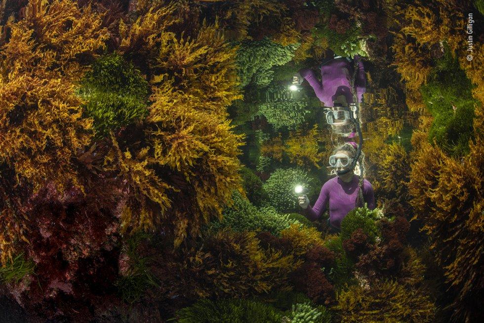 Justin Gilligan (Australia) fotografía el reflejo de un guardián marino entre las algas. En el arrecife tropical más meridional del mundo, Justin quería mostrar cómo la cuidadosa gestión humana ayuda a preservar esta vibrante selva de algas. Con sólo una ventana de 40 minutos en la que las condiciones de la marea eran las adecuadas, Justin necesitó tres días de ensayo y error antes de conseguir su imagen. Los efectos del cambio climático, como el aumento de la temperatura del agua, están afectando a los arrecifes a un ritmo cada vez mayor. Los bosques de algas mantienen cientos de especies, capturan carbono, producen oxígeno y ayudan a proteger las costas.