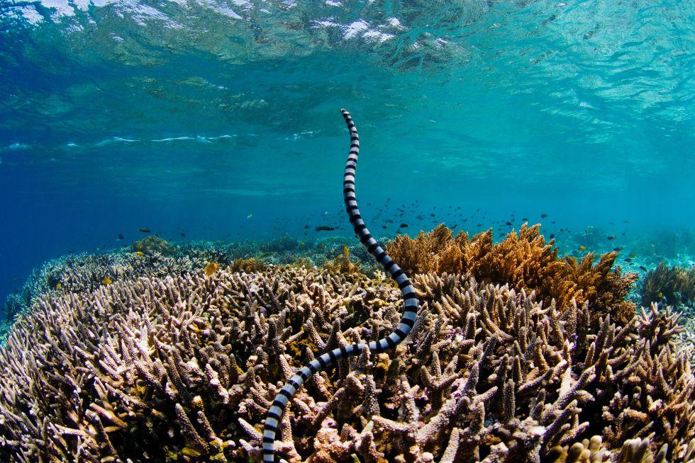 Fotos Los Mejores Arrecifes Del Planeta El Viajero El País