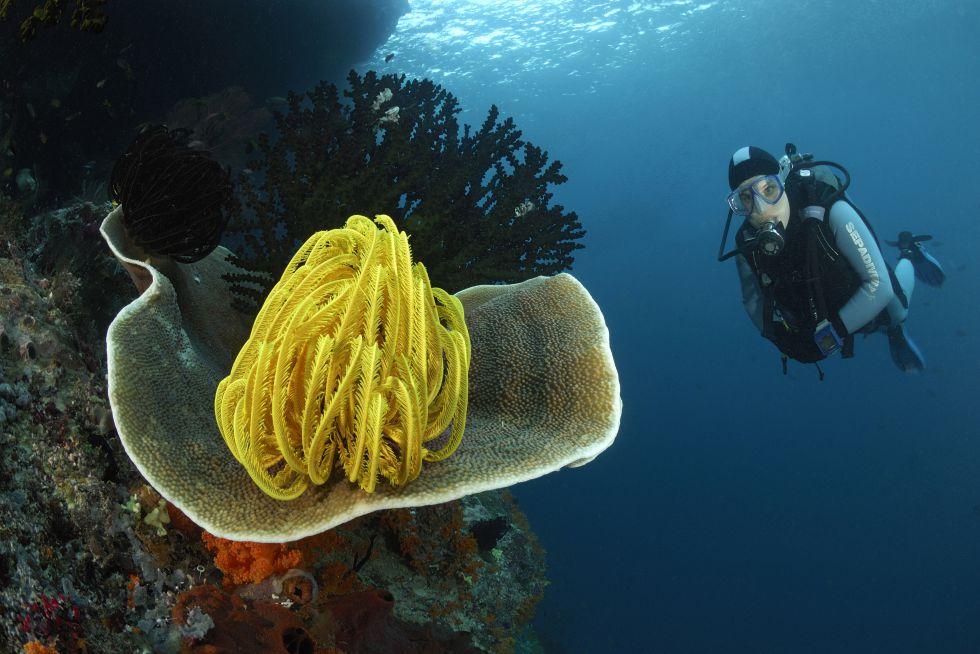Bucea entre los arrecifes de coral más bonitos de mundo