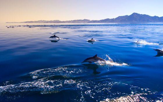 Las 20 caras de mxico el viajero el pas un grupo de delfines de lados blancos del pacfico en puerto escondido en oaxaca thecheapjerseys Gallery