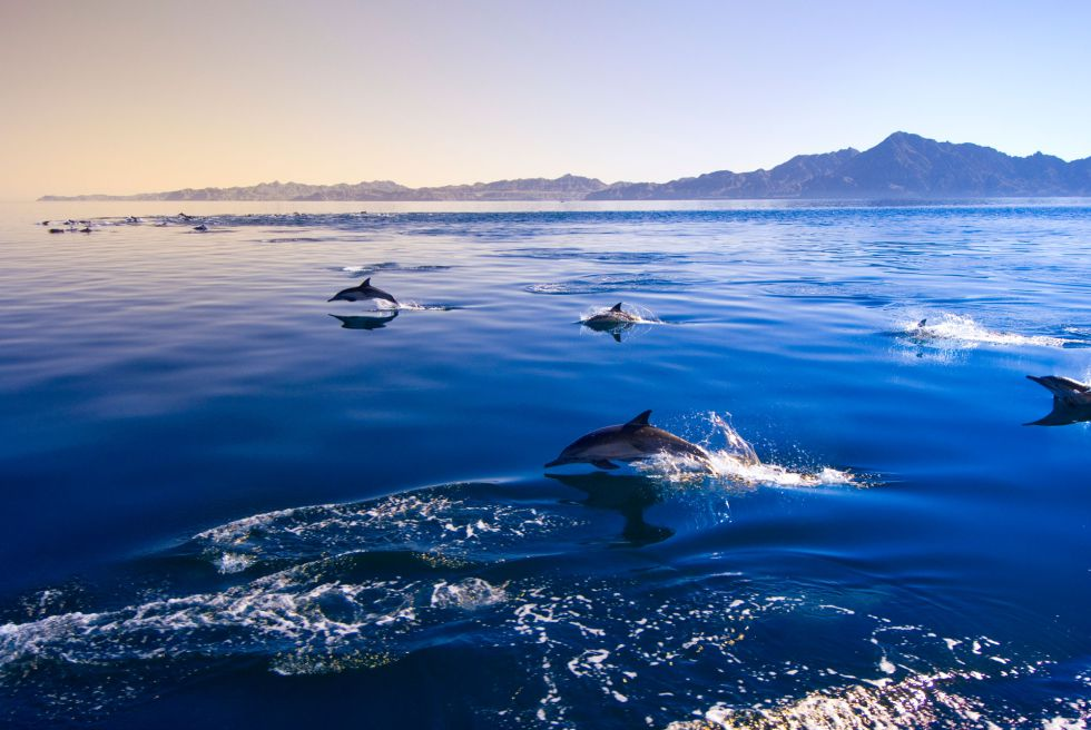 Fotos delfines picante y leyendas mayas el viajero el pas pirmides mayas templos legendarios ciudades coloniales playas paraso fondos submarinos museos altavistaventures Images