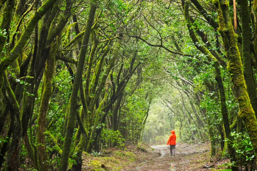 Fotos: Siete Bosques Españoles Para Sentir La Primavera