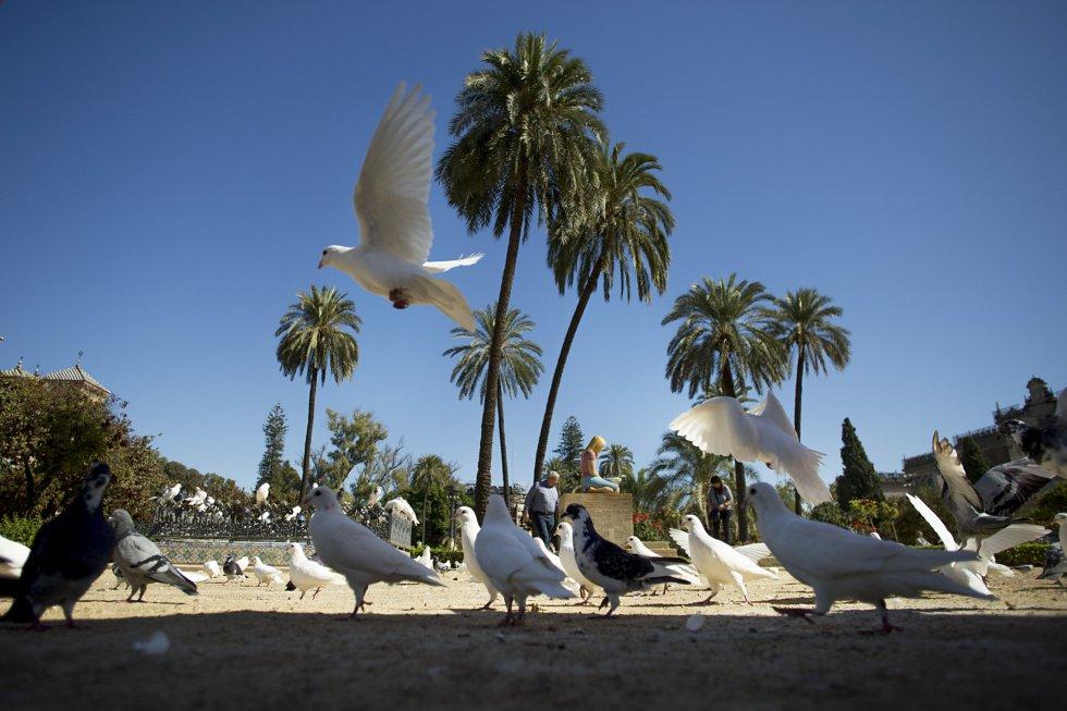 El parque de María Luisa es el primer parque urbano de Sevilla y uno de sus pulmones verdes. En 1983 fue declarado Bien de Interés Cultural en la categoría de Jardín Histórico. Se inauguró el 18 de abril de 1914 como parque urbano Infanta María Luisa Fernanda. Una de las zonas más visitadas es la conocida como la glorieta de las palomas, en la plaza de América.