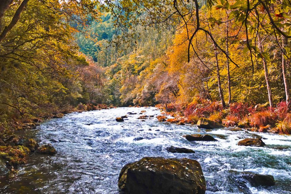10 superbosques para el otoño