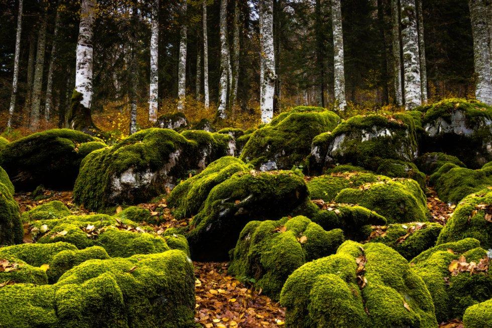 Cuando el otoño llega a la Selva de Irati, uno de los mayores bosques de haya y abeto de Europa, en el Pirineo oriental navarro, el verde de los líquenes que trepan por raíces y troncos contrasta con la gama de rojos de las hojas caídas, creando una atmósfera onírica que envuelve al viajero. A esta enorme mancha forestal de unas 17.000 hectáreas, que cambia de color con cada estación, se accede desde Orbaitzeta, en el valle de Aezkoa, y desde Ochagavía, en el valle de Salazar.