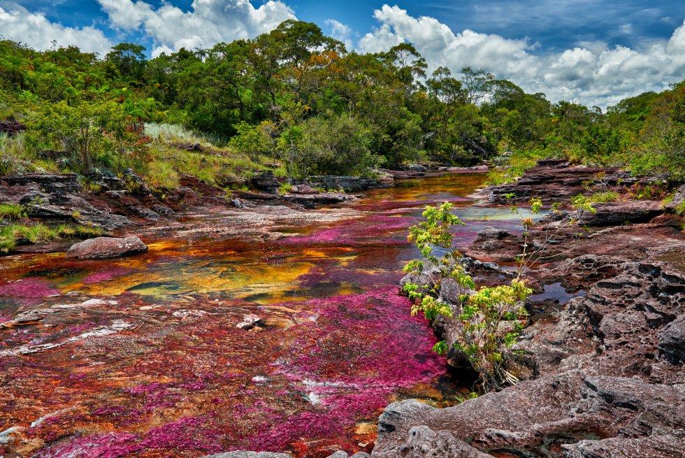 Hay quien califica al Caño Cristales como el río más hermoso del mundo. Sus aguas transparentes nacen en la meseta sur de la Serranía de La Macarena, en el departamento colombiano del Meta, y dejan ver, como a través de un cristal, el colorido de las plantas acuáticas, la arena y las formaciones rocosas de su lecho. Amarillos, azules, verdes, rojos, negros. Por eso también se le conoce como el río de los cinco colores, aunque más que un río es un caño, como le llaman los lugareños, porque ni es muy ancho (20 metros, a lo sumo) ni muy largo (no más de 100 kilómetros). No está abierto al público todo el año, y la nueva temporada comienza en junio de 2018.