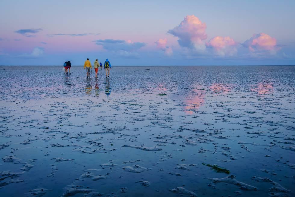 Durante la marea baja es posible atravesar caminando el Mar de Frisia, o de Wadden, situado entre el litoral continental y las Frisias, cadena de islas e islotes que emergen del Mar del Norte en paralelo a la costa noroccidental de Europa, desde los Países Bajos hasta Alemania y el suroeste de Dinamarca. Esta llanura de marea de unos 450 kilómetros de largo, muy poco profunda, con grandes planicies arenosas que quedan a la vista, es muy rica en flora y fauna, en especial de aves. Limícolas, anatinos, anserinos, gaviotas y estérnidos. Los gobiernos de los tres países llevan desde 1978 trabajando conjuntamente en su protección y conservación.