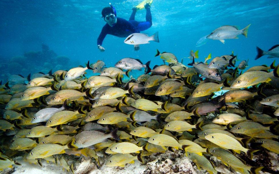A Barreira de Corais de Belize é a segunda maior do mundo, um paraíso subaquático com lugares como a Reserva de Hol Chan, onde se pode praticar snorkel entre os tubarões-enfermeiro, arraias e peixes multicoloridos, ou o Great Blue Hole (grande buraco azul), um cenote submarino de 300 metros de diâmetro e mais de 120 metros de profundidade.