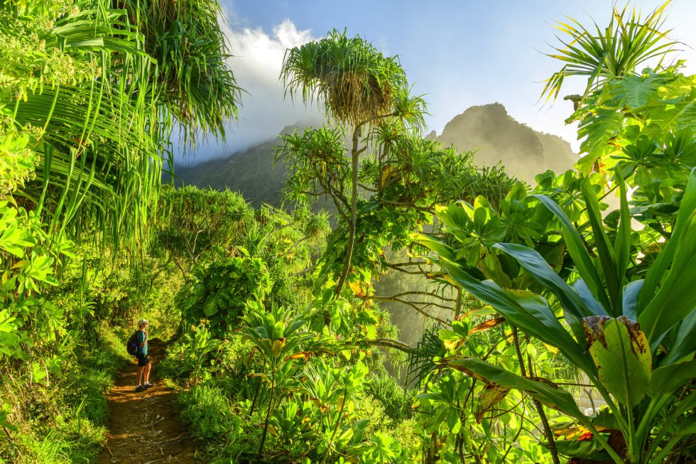 Steven Spielberg encontrou entre as samambaias arborescentes e as cúpulas brumosas da ilha de Kauai, a mais antiga do arquipélago norte-americano, o platô perfeito para filmar Jurassic Park: O Parque dos Dinossauros. A trilha Kalalau Trail (na foto), de 35 quilômetros, permite percorrer as praias e escarpas da costa de Nã Pali.