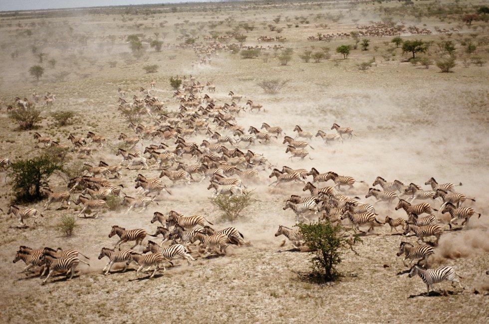 No início da estação das chuvas, em novembro, as zebras do delta do Okavango, em Botsuana, empreendem uma viagem às marismas de Makgadikgadi. O rio busca sua saída ao mar, mas acaba devorado pelo deserto do Kalahari, formando um delta interior que borbulha vida, uma reserva natural habitada por milhares de elefantes, hipopótamos, girafas, gnus e crocodilos.