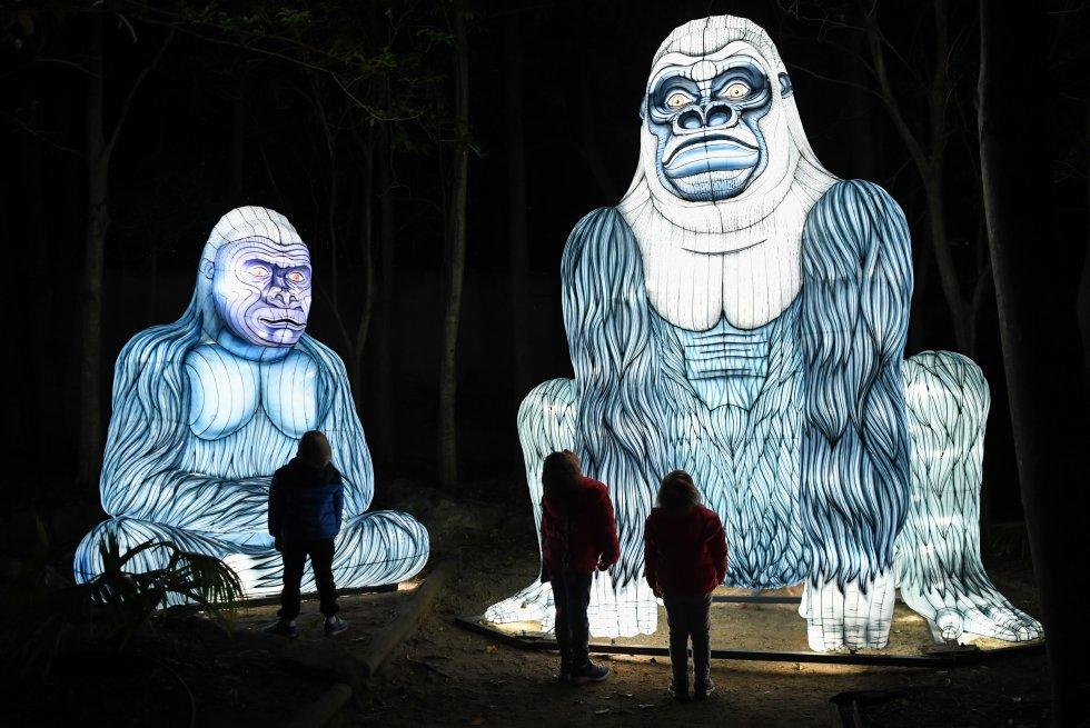 O 'Vivid Sidney' também ocupa o Taronga Zoo de Sidney. A cada noite, até 15 de junho, se iluminarão 300 lanternas com formas de animais em perigo de extinção. Além dos dois gorilas da imagem, koalas, tigres ou rinocerontes também são protagonistas de 'Lights for the Wild', que pretende ser toda uma experiência tanto para adultos como para os mais pequenos, pois a instalação inclui som.