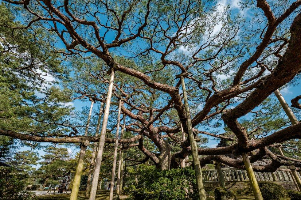 Kenrokuen forma, junto con Korakuen (en Okayama) y Kairakuen (en Mito), la terna de jardines más bellos de Japón, según los propios nipones. Su nombre significa  Jardín de los Seis Atributos , y hace referencia a que este espacio verde combina y aúna los seis elementos del jardín perfecto, según dejó escrito el famoso poeta chino Li Gefei en su libro de jardinería: espacio, calma y serenidad, elementos artificiales y antiguos, agua abundante, amplias vistas. Alberga la casa de té Yugao-tei, la casa de descanso Shigure-tei, el puente Ganko-bashi, los majestuosos pinos Karasaki o la fuente más antigua del país. En 1985 fue declarado Sitio Nacional de Belleza Escénica Especial.