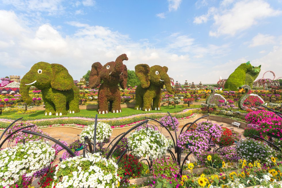 El nombre no podía haber sido más acertado:  Jardín del Milagro  (Miracle Garden) es un espacio de 72.000 metros cuadrados cubierto por más de 45 millones de flores que crecen en mitad del desierto de Dubái, una de las zonas más áridas e inhóspitas del mundo. Un milagro de la tecnología, en todo caso, que se inauguró en el Día de San Valentín de 2013 y se ha convertido en el mayor jardín de flores naturales del mundo. Alfombra formas extravagantes, excesivas incluso: desde relojes a pavos reales con las colas desplegadas pasando por aviones, coches, casas o barcos. Un parque de atracciones floral que, eso sí, cierra en verano; volverá a abrir de noviembre a abril de 2020. Hasta para los milagros hay límites.