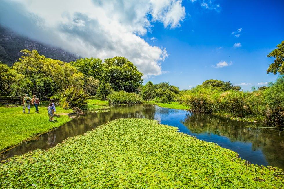 """Kirstenbosch, término utilizado por los boers o afrikaners para designar """"jardín botánico"""", es el mayor de los ocho jardines botánicos nacionales de Sudáfrica, y está considerado uno de los más bellos del planeta. Más de 7.000 especies diferentes de plantas de la región –aromáticas, medicinales, ornamentales– crecen en sus 528 hectáreas divididas en 470 hectáreas de vegetación natural y 58 de jardines acondicionados.  Kirstenbosch alfombra la Montaña de la Mesa , a 13 kilómetros del centro de Ciudad del Cabo, y en verano invita a disfrutar de conciertos al aire libre, durante la puesta de sol, todos los domingos."""