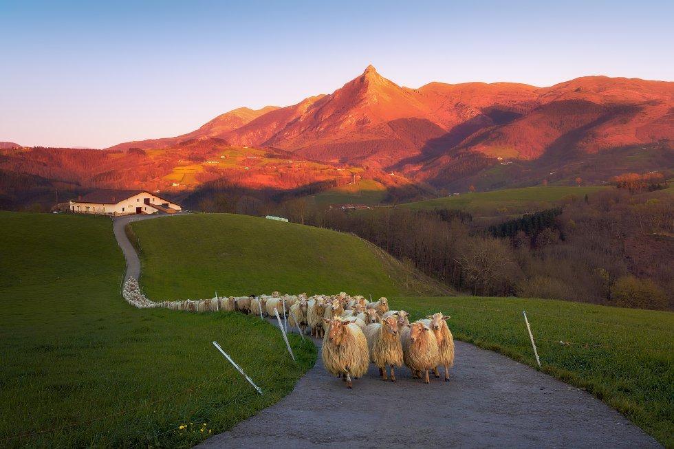 La sierra de Aralar  despunta a caballo entre Navarra y Gipuzkoa, pero solo la parte vasca está declarada parque natural. Abaltzisketa y Ataún son las dos puertas de entrada a una de las áreas montañosas más importantes de Euskadi, que tiene en la cima del Txindoki (o Larrunarri) uno de sus iconos. Con muchas posibilidades de turismo de naturaleza, gastronómico y etnográfico: caseríos, el queso Idiazabal, la sidra, rutas senderistas, ecuestres y en bicicleta de montaña. Y temperaturas suaves durante todo el año, 17ºC las máximas, 7ºC las mínimas (siempre de media).   En la imagen, un rebaño de ovejas en Lazkaomendi con vistas a la montaña Txindoki.