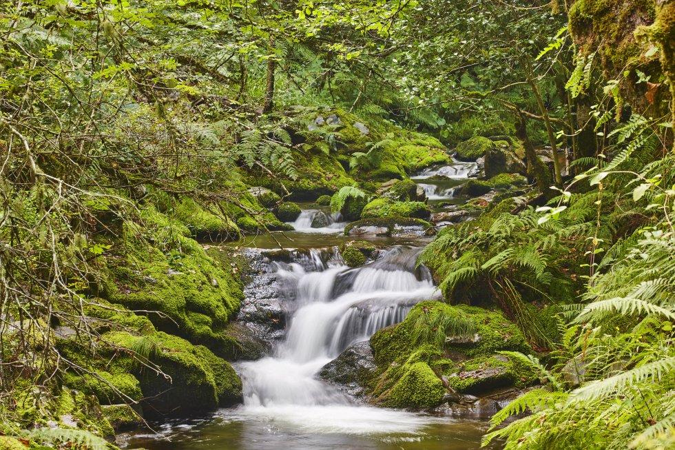 El parque natural de las Fuentes del Narcea, Degaña e Ibias  (Reserva de la Biosfera por la Unesco) ocupa una gran extensión del mayor concejo de Asturias, rico en casonas y palacios de estilo rural construidos entre los siglos XVI y XVIII. Dentro de los límites de este espacio natural se encuentra el bosque de Muniellos (en la imagen), el mayor robledal de España y uno de los mejor conservados de Europa. Tradicionalmente, estas tierras, con una temperatura media en verano de 19,3ºC (y máximas de 25), son refugio tanto del oso pardo cantábrico como de quienes vienen huyendo del calor.