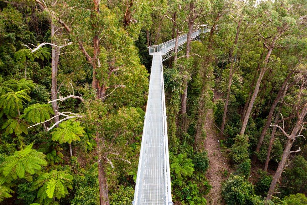 Não é apenas um mirante, mas algo muito mais original: a melhor maneira de se conectar com os pássaros. Esta caminhada atravessa as copas das árvores dos planaltos frondosos do sul da Austrália, clima temperado. A 25 metros acima do solo, entre eucaliptos, acácias e amoreiras, o Illawarra Fly Treetop Walk ( illawarrafly.com ) tem uma plataforma de 500 metros com vistas espetaculares sobre o dossel da floresta e as escarpas das montanhas circundantes, que fazem parte da Great Divide Range. Você também pode escalar a Knights Tower (torre dos Cavaleiros), 20 metros acima da plataforma. No segundo sábado de cada mês, o Illawarra Fly Treetop Walk abre das 6h às 9h para contemplar ao nascer do sol (você tem que reservar).