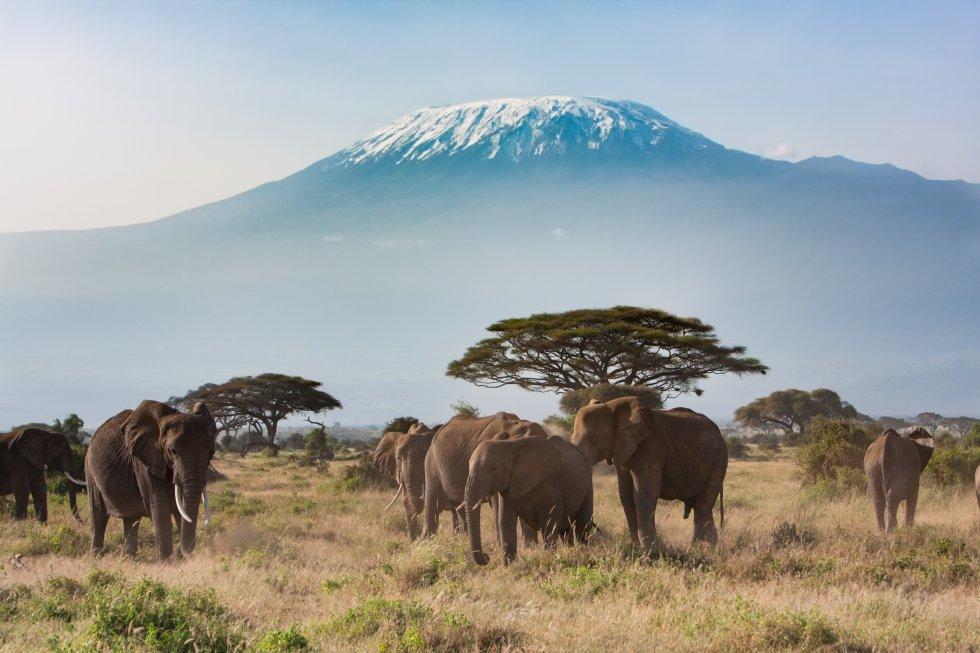 Uno de los grandes iconos de África , formado por tres volcanes inactivos: Mawenzi, Shira y Kibu, cuyo pico, Uhuro, roza los 5.892 metros sobre el nivel del mar, siendo el techo de África. Se alza en el norte de Tanzania, cerca de la ciudad de Moshi, y se accede a su cima mediante seis rutas de 'trekking' y otras tantas para alpinistas experimentados. También hay senderos naturales en sus tramos más bajos y un buen abanico de 'campings', hoteles y cabañas por sus alrededores. A pesar de la protección que supone el hecho de que sea parque nacional, está perdiendo los famosos campos de hielo de su cumbre por culpa del calentamiento global.