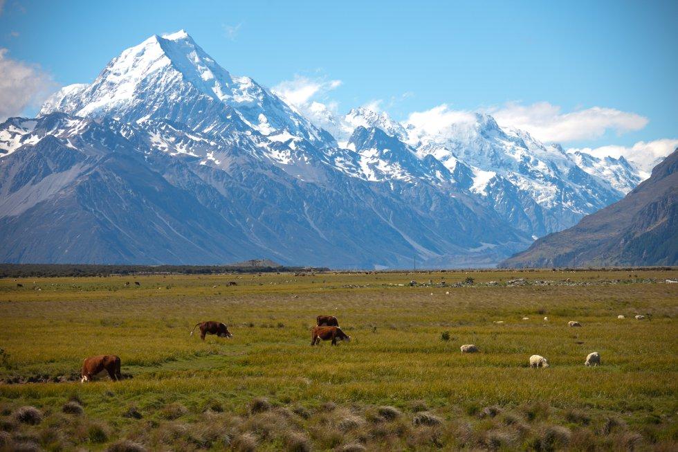El nombre maorí y el inglés conviven en la denominación oficial de   la montaña más alta de Nueva Zelanda , a 3.764 metros sobre el nivel del mar, despuntando de entre los otros 22 tresmiles del parque nacional homónimo. Una tierra abrupta y escarpada, dominada por la roca y el hielo, en los Alpes neozelandeses, en la costa occidental de la isla Sur. De sus laderas cuelgan varios glaciares, como el Tasman y Hooker. Un escenario de película: en 'El señor de los anillos' es el exterior del monte Caradhras, Reino de Moria, donde los Enanos cavaron tanto en busca de mithril que despertaron a un balrog de Morgoth.