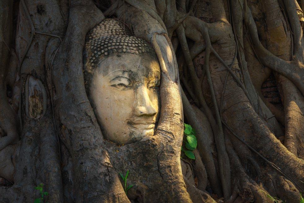 Enigmáticos templos en ruinas llenan la ciudad de Ayutthaya que, actualmente, apenas conserva parte de su esplendor, pero que en otros tiempos fue una fabulosa capital con cientos de edificaciones religiosas y palacios llenos de tesoros. Fue la capital de Siam entre 1350 y 1767, año en el que fue víctima de un brutal saqueo birmano. En su momento álgido, la ciudad tenía más de 400 templos, aunque solo algunas decenas de ellos han sido restaurados parcialmente. Lo más fotografiado es Wat Mahathat, una cabeza de Buda de arenisca apresada entre las raíces de un árbol (en la foto). Lo mejor es recorrer en bicicleta sus ruinas de ladrillo y estuco (patrimonio mundial) mientras se imagina su aspecto en su época dorada, cuando recibía mercaderes de todo el mundo. Las afueras de la ciudad deparan más atracciones, entre ellas un enorme centro de artesanía y el palacio real más ecléctico jamás visto.