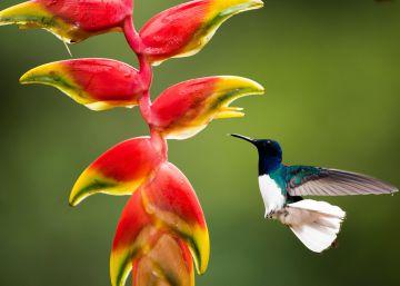 Costa Rica: un delirio de la naturaleza para vivir mil y una aventuras