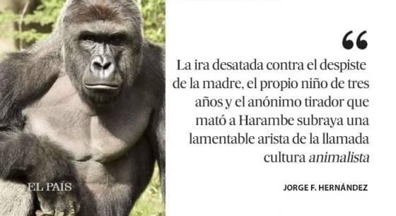 Gorila Harambe: El bebé de King Kong   Internacional   EL PAÍS