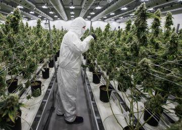 Cinco detenidos tras el asalto a mano armada a una plantación de marihuana en Pontevedra
