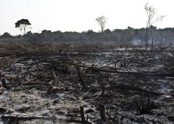México perdió 250.000 hectáreas de bosques en 2016