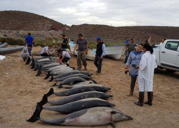Mueren 21 delfines que se quedaron varados en una playa mexicana