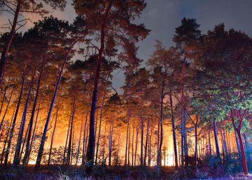 Incendios y pérdidas millonarias para el campo por la ola de calor en Alemania