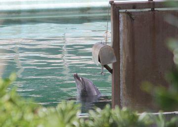 Un delfín y 46 pingüinos, abandonados desde hace meses en un acuario clausurado en Japón