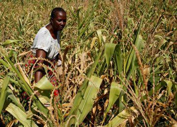 El hambre amenaza a 45 millones de personas en el sur de África