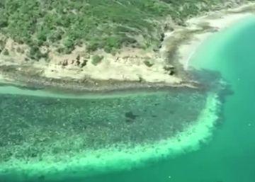 La Gran Barrera de Coral de Australia sufre un pico de altas temperaturas