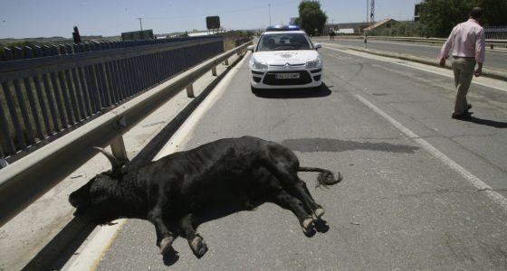 Once Heridos Tras Escaparse Un Toro En Talavera De La Reina España El País
