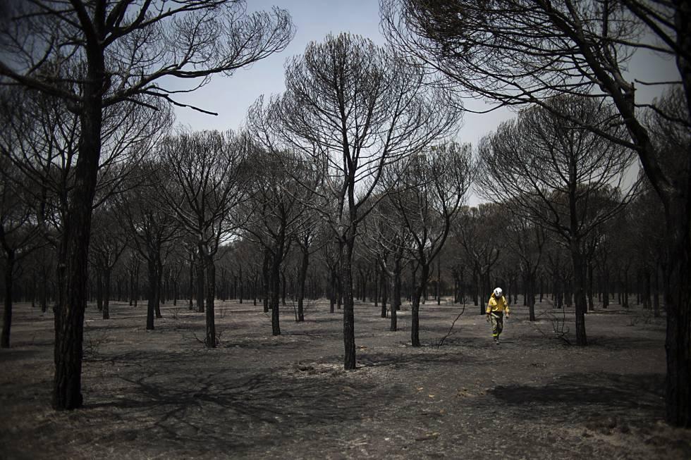 Los responsables del gran incendio de Doñana intentaron borrar las pruebas con maquinaria pesada