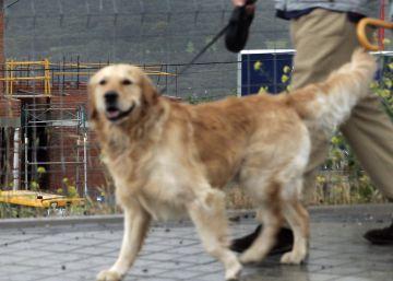 El Congreso debate modificar el Código Civil para considerar a los animales seres vivos y no cosas