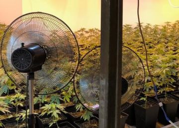 Detenidas 36 personas esta semana por cultivar marihuana en Málaga