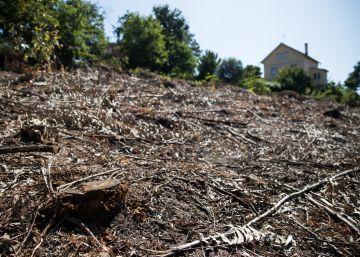 Galicia se blinda contra el fuego: multas de hasta 100.000 euros si no se limpian las fincas
