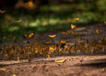 Empatía empresarial para domar el efecto mariposa