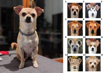 Inteligencia artificial para convertir a tu perro en una hiena