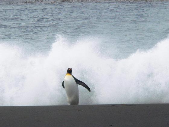 Pingüino marcado, pingüino perjudicado | Sociedad | EL PAÍS