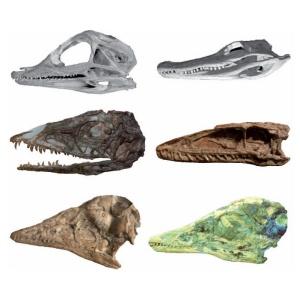 Birds' Skulls correspond to the Skulls of Young Dinosaurs