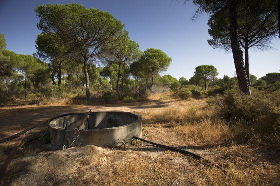 Doñana cierra el grifo | Sociedad | EL PAÍS