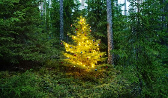 pino decorado en heionla finlandia